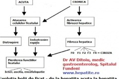 evolutia-hepatitei-ac